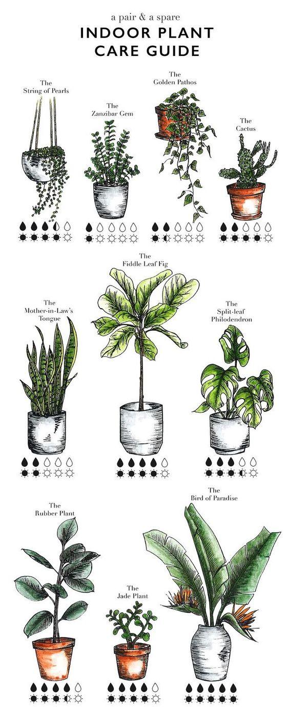 rośliny doniczkowe, rośliny do mieszkania