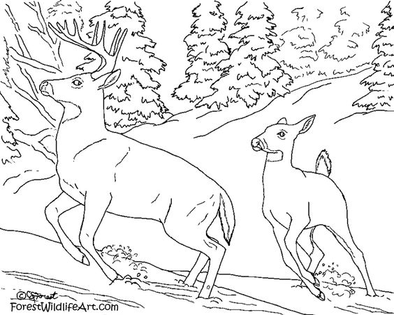 coloring pages coloring and for kids on pinterest