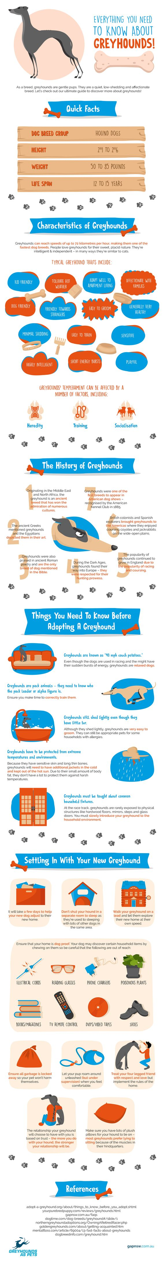 Greyhounds can reach speeds of up to 45 miles per hour