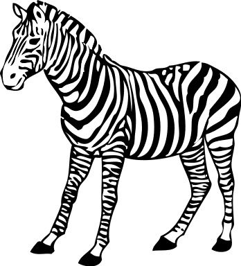 coloring pages zebras and coloring on pinterest