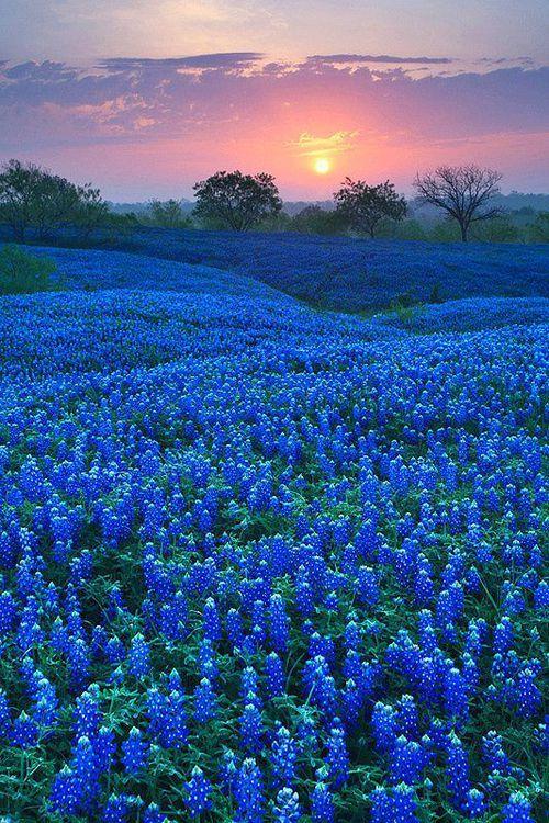 Field in Ellis County, Texas Landscape