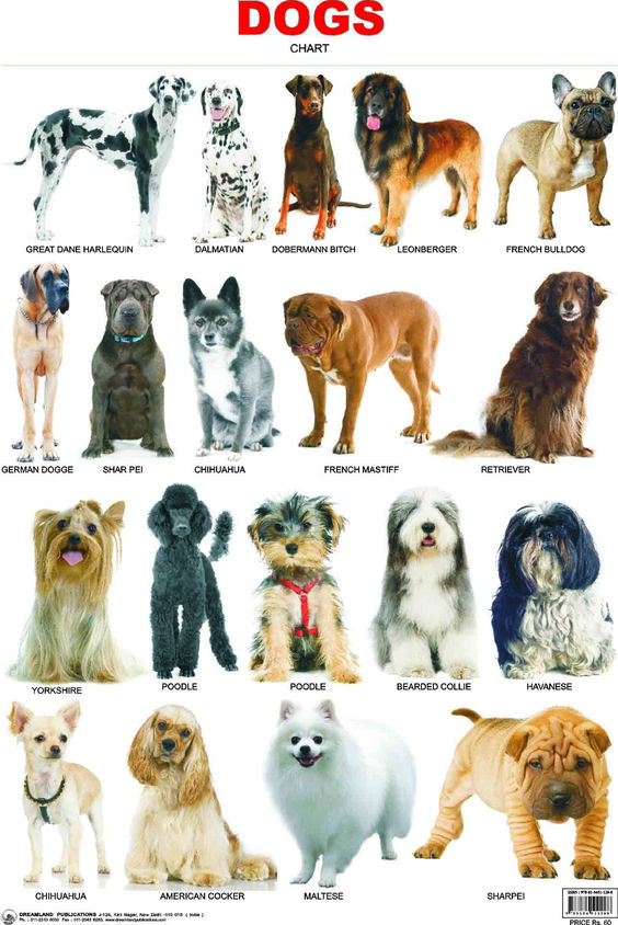 Dogs, Dog breeds and Charts on Pinterest