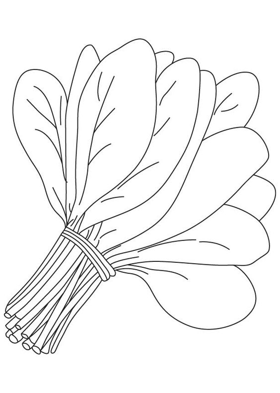 Coloring Pages Of Leafy Vegetables. vegetable coloring pages free ...