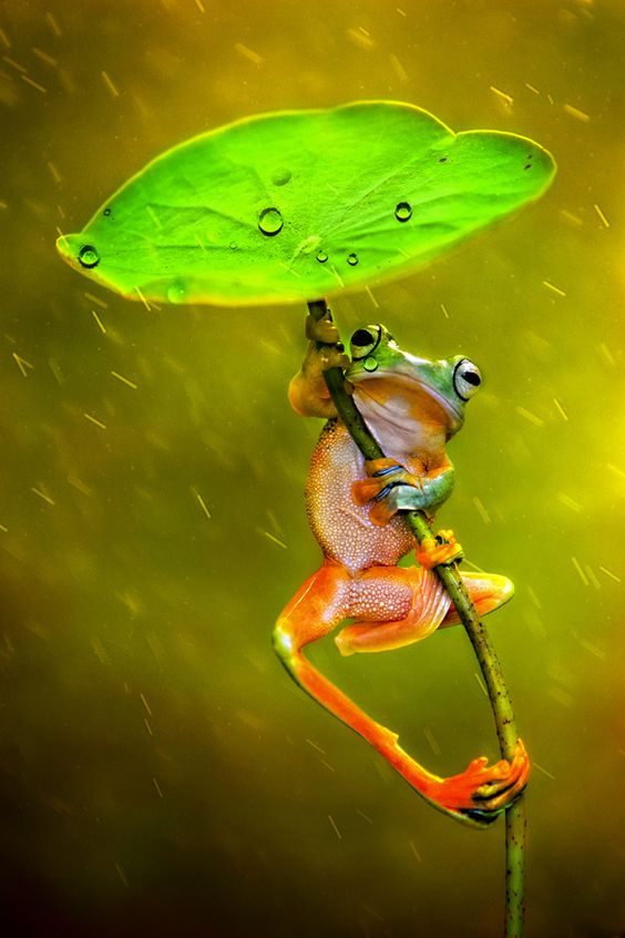 Photograph Raining by Ellena Susanti on 500px: