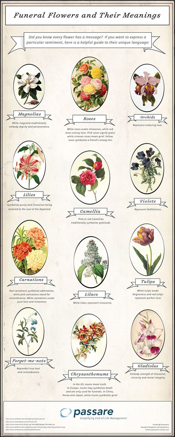 Funeral Flowers and Their Meanings Infographics
