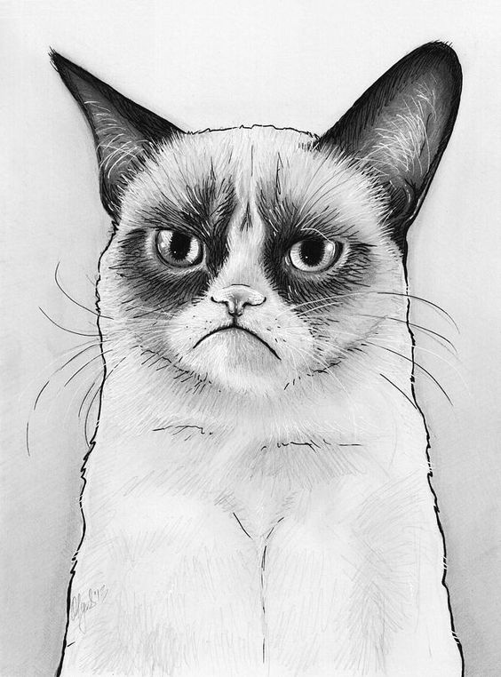 grumpy cat coloring pages and coloring on pinterest