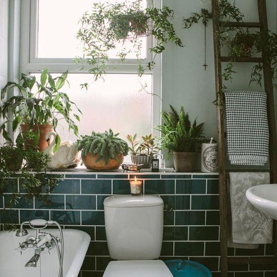 piante nella stanza da bagno