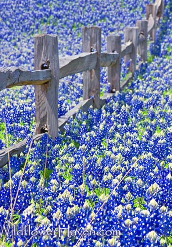 Beautiful, Maybe someday and Flower on Pinterest