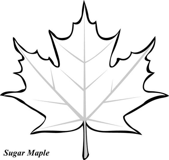 maple leaves leaves and coloring pages on pinterest