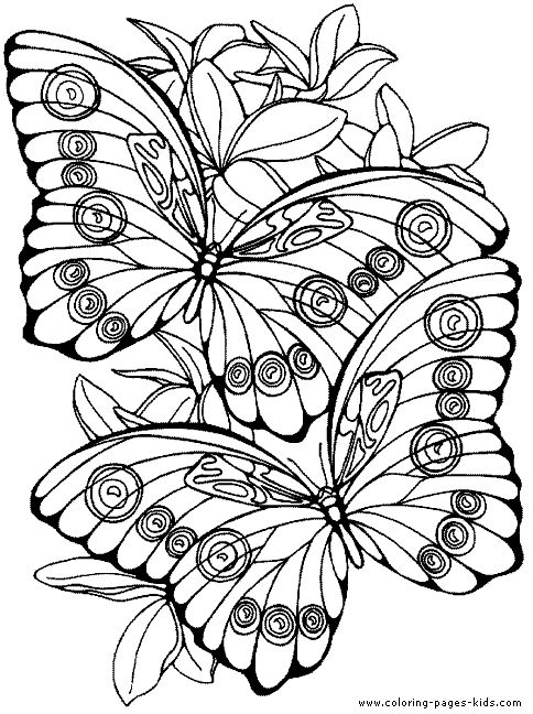 butterfly coloring pages for adults druntk