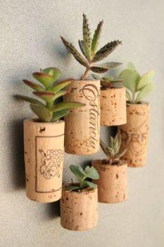 Plantas suculentas em rolhas: