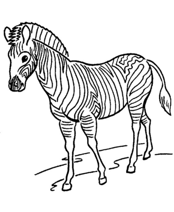 zoo animals animal coloring pages and zebras on pinterest