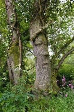 sleeping tree