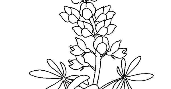 bluebonnet flowers coloring pages jpg 718Ã 957 bluebonnets and