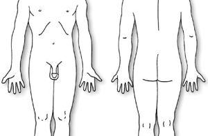 Human Body Diagram   body diagram: male   pain dr
