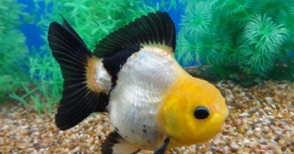 Small Goldfish Pond Ideas