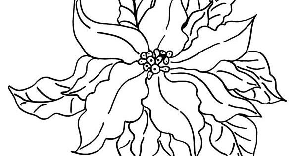 images of poinsettia coloring pages print  christmas