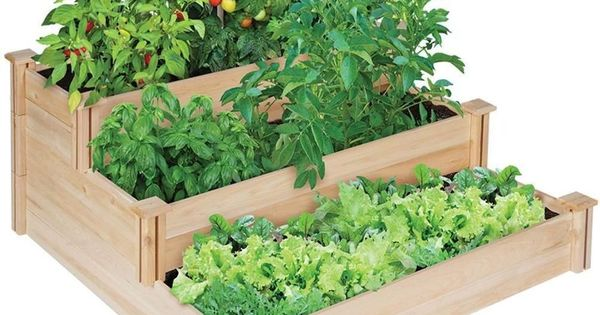 What Kind Wood Vegetable Planter Box