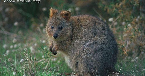 Common Names Marsupials