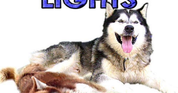 Northern Lights Husky Rescue