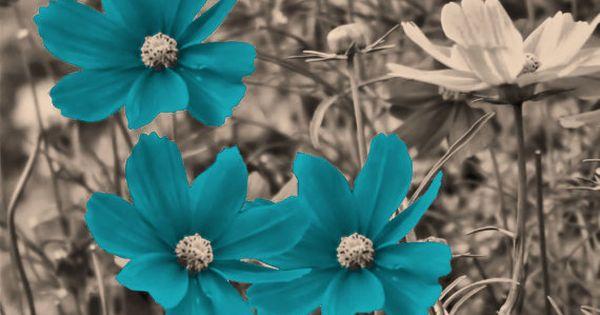 Black White And Blue Flowers Color Splash