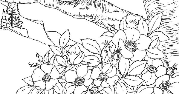 and flowers coloring pages amp pictures imagixs advanced coloring