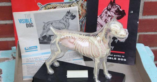 Race Horse Veterinary Graphics