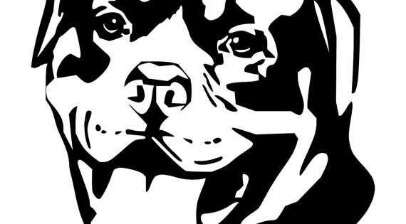 Pit Faces Bulls Drawings