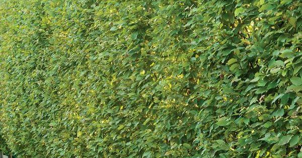 Tree Back Yard Fencing Lines