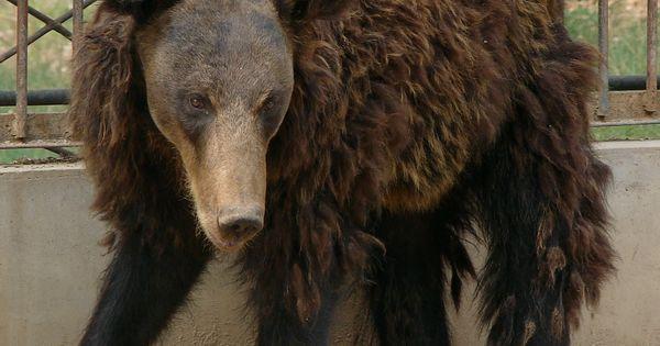 Ever Baby Bear Cutest