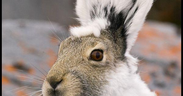 Happy Valentines Day Pet Rabbit
