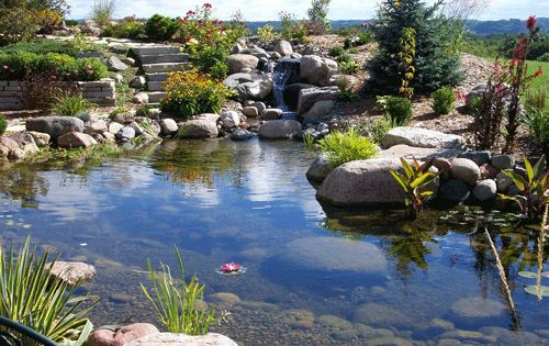 Goldfish Pond Ideas