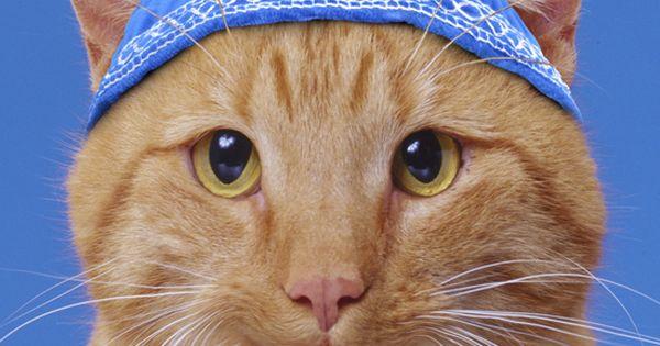 Humorous Portrait Of A Cat Wearing A Yamaka Or Yarmulke
