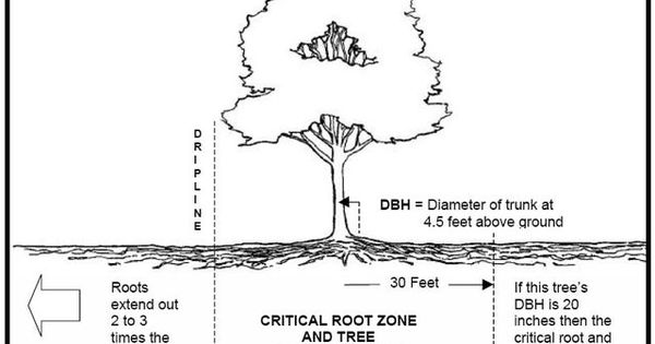 Vertical Mulching A Tree's Critical Root Zone Increases