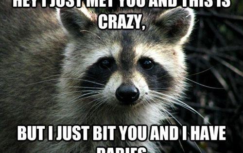 Make Me Laugh Animals