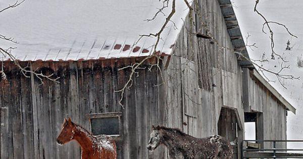 Snow Horses By Denise Romano Barns Especially Love The