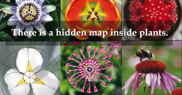 Image result for hidden map inside plants