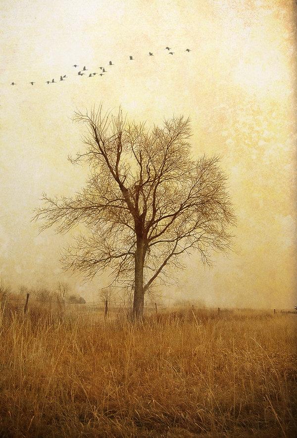 tree background poem backgrounds Pinterest Trees