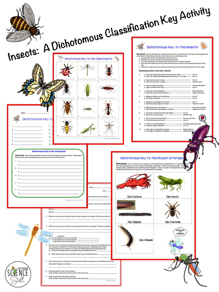 Science Stuff Blog An insect dichotomous key activity