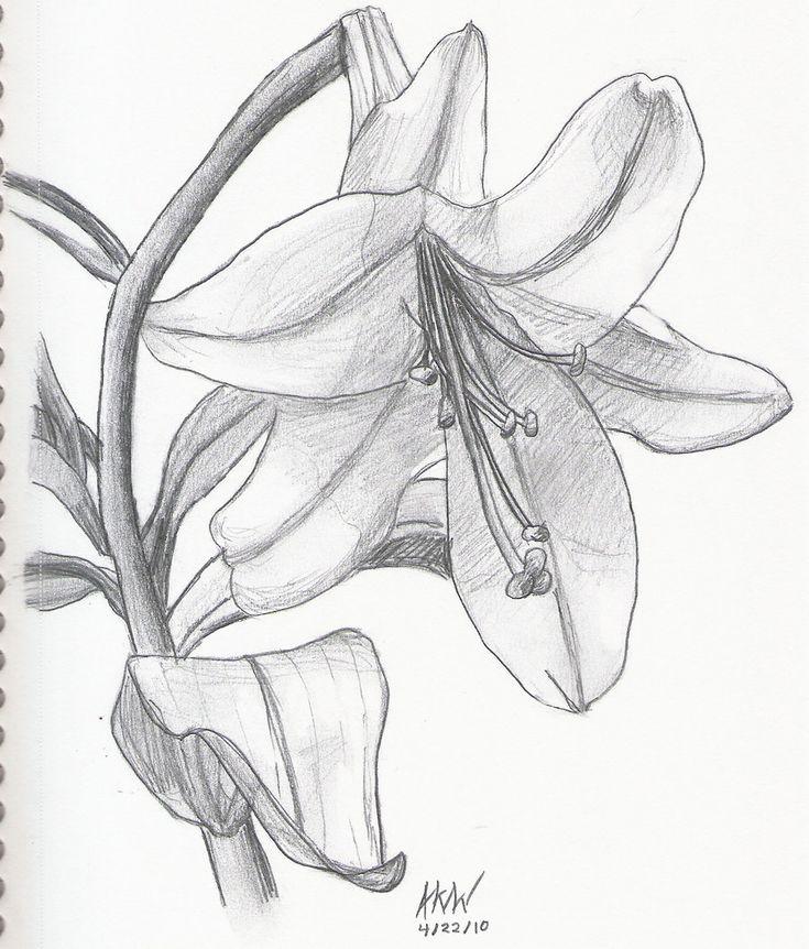 Lily Coloring Pages & Pictures IMAGIXS Line Art