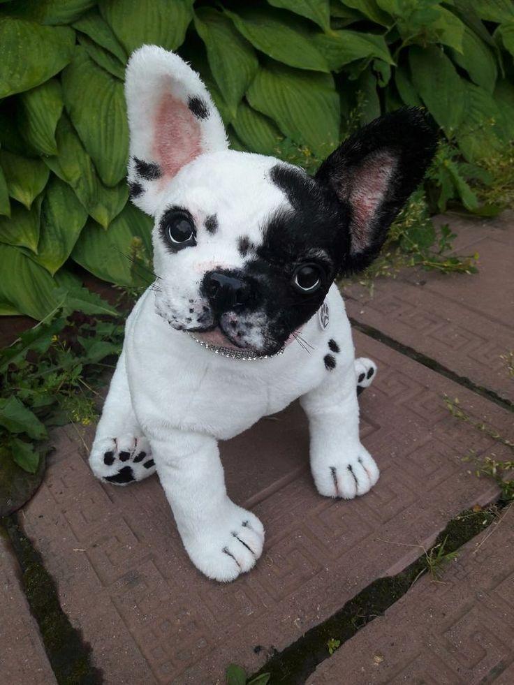 "French bulldog 14 "" puppy dog realistic French bulldogs"