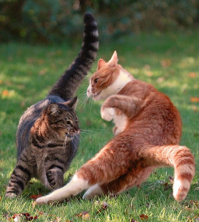 Cat fight Cats.....in flight! Pinterest Cats, Plays