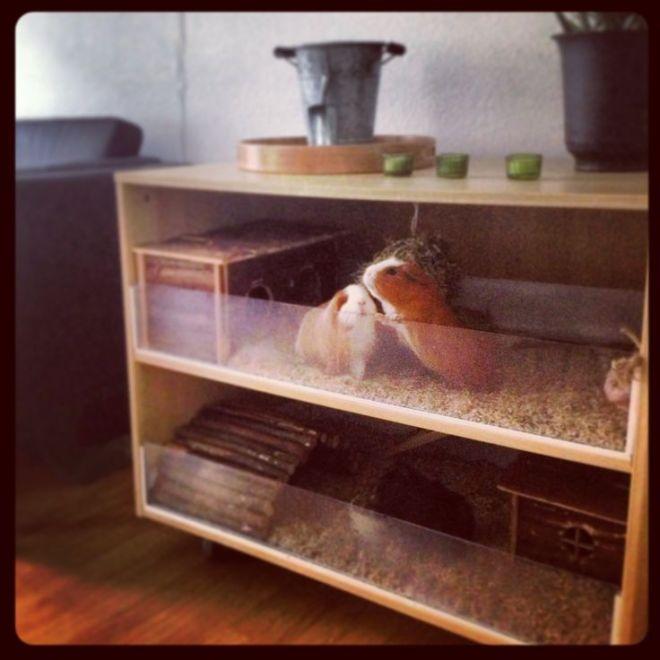 Guinea pig cage home made creative ideas diy