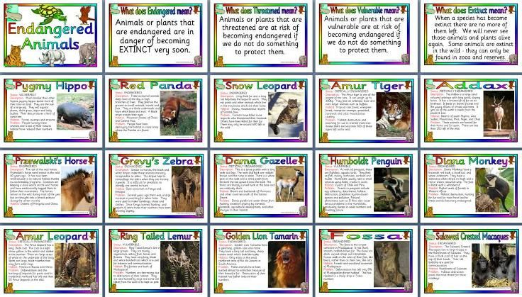 Endangered animals posters 2 pounds Teaching Topic