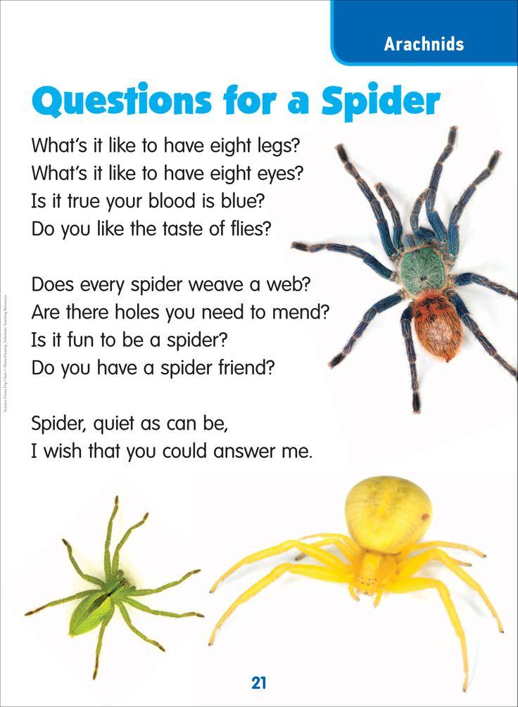 Spider Poem