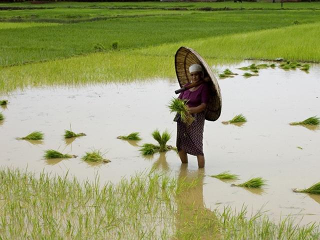 Kerala umbrella made by palm leaf (OLAKKUDA) struggle