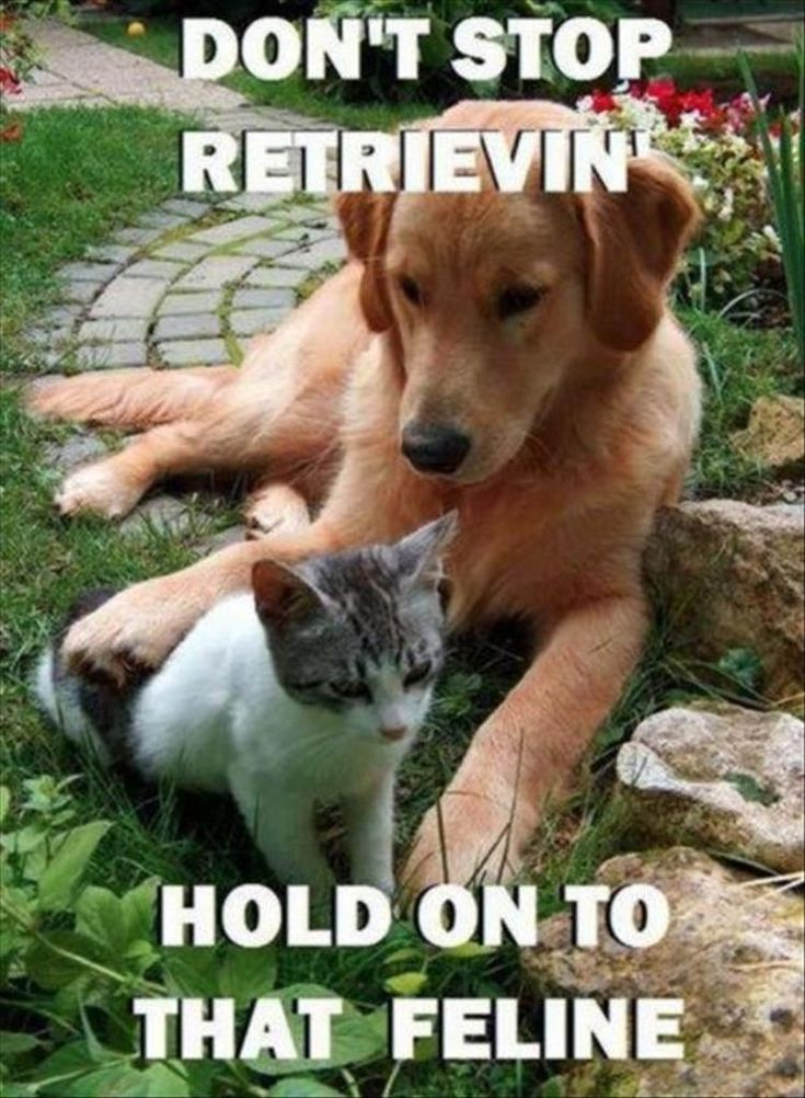 Funny Animal Pictures Of The Day 24 Pics Funny Animals