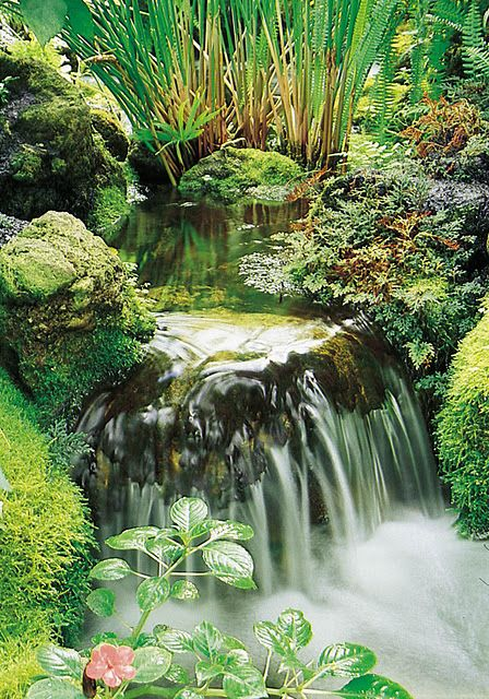 Waterfalls with ferns and moss. Waterfalls Pinterest