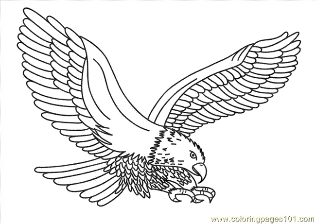 1000 images about eagle coloring pages on pinterest eagles