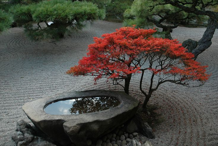 Red Maple and Stone Water Basin in Japanese Garden: